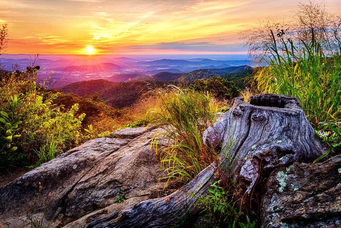 Stump at Hazel Mountain Overlook