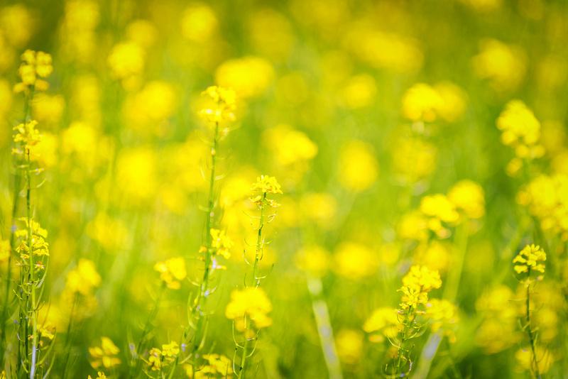 Flowers in Shenandoah