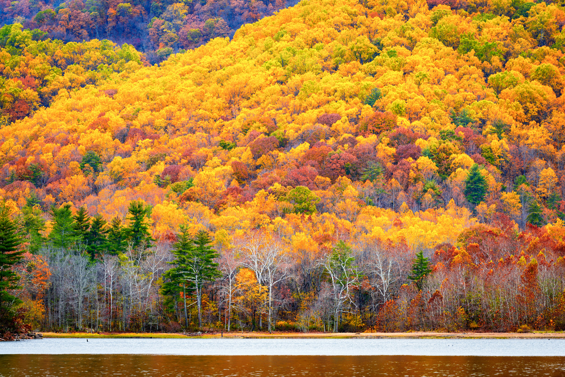 Fall Colors at Charlottesville Reservoir