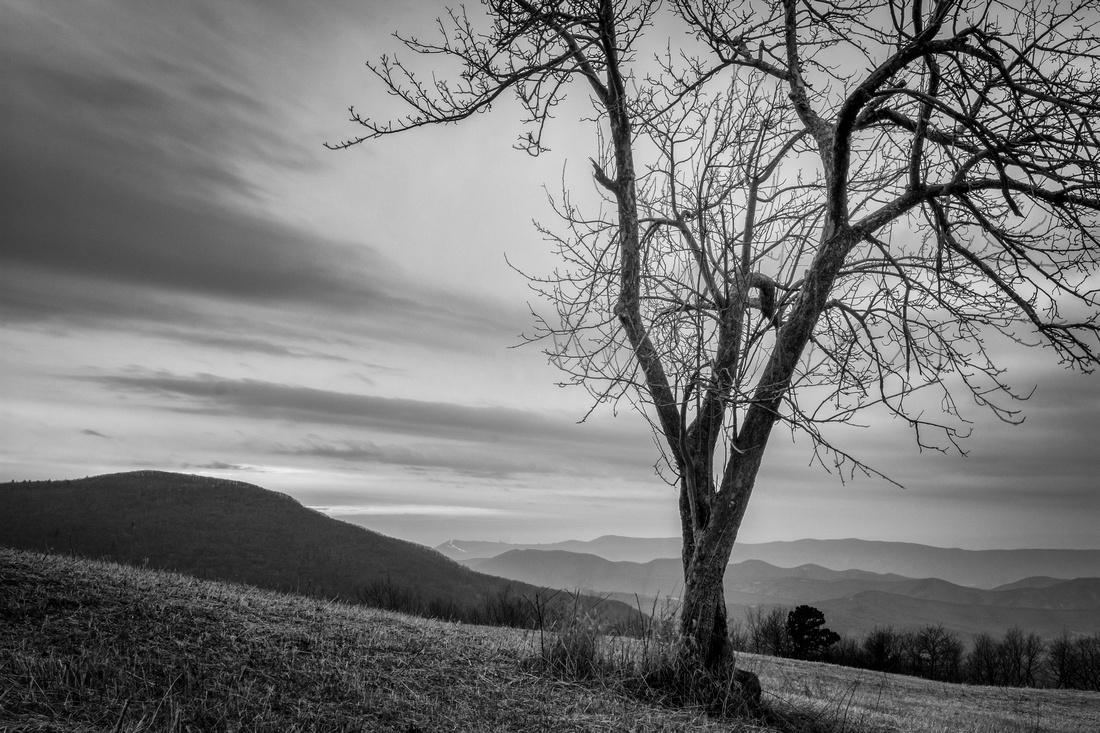 Spitler Knoll Tree
