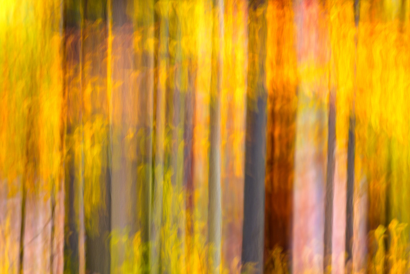Fall Color Abstract