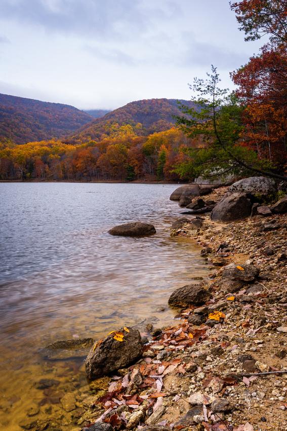 Banks of the Charlottesville Reservoir