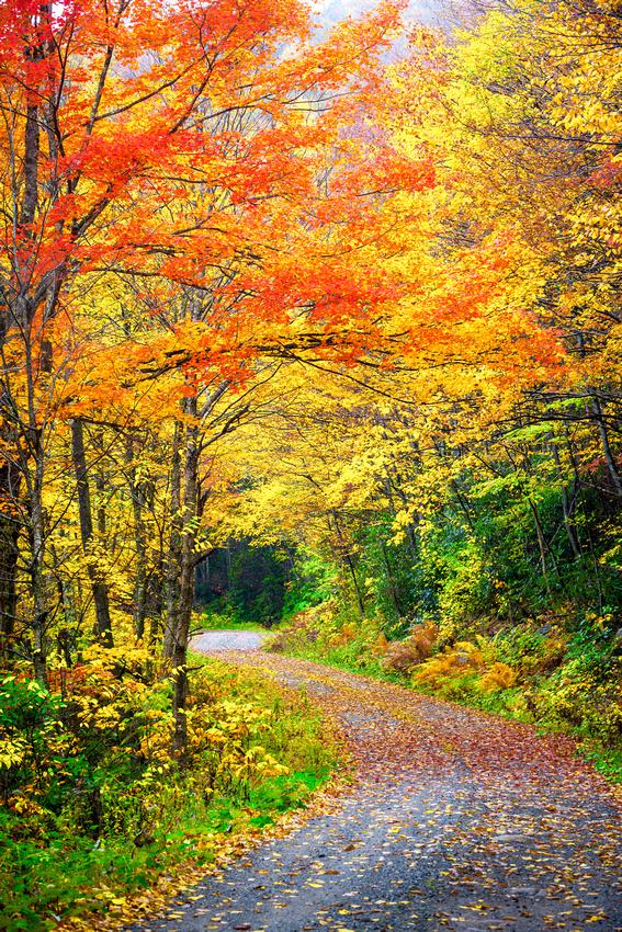 Fall Road in West Virginia