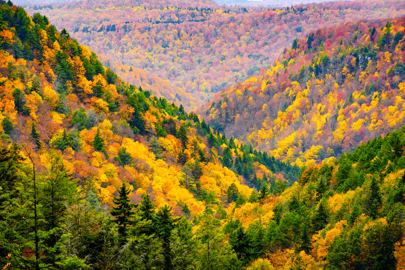 Fall in the Allegany Mountains